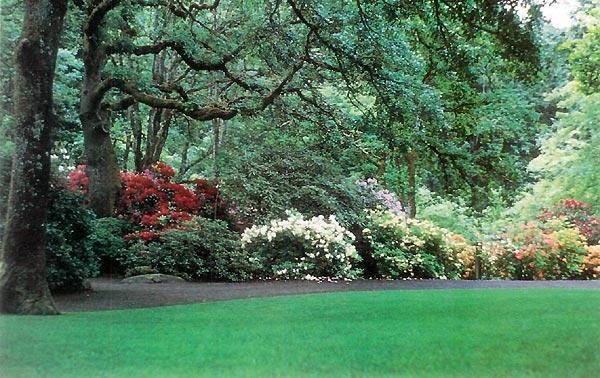 JARS v41n2 - Hendricks Park Rhododendron Garden