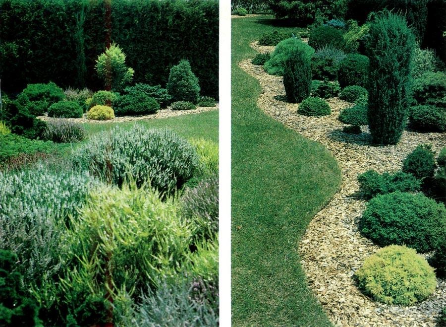 Dwarf Conifers Garden Design wwwimgarcadecom Online