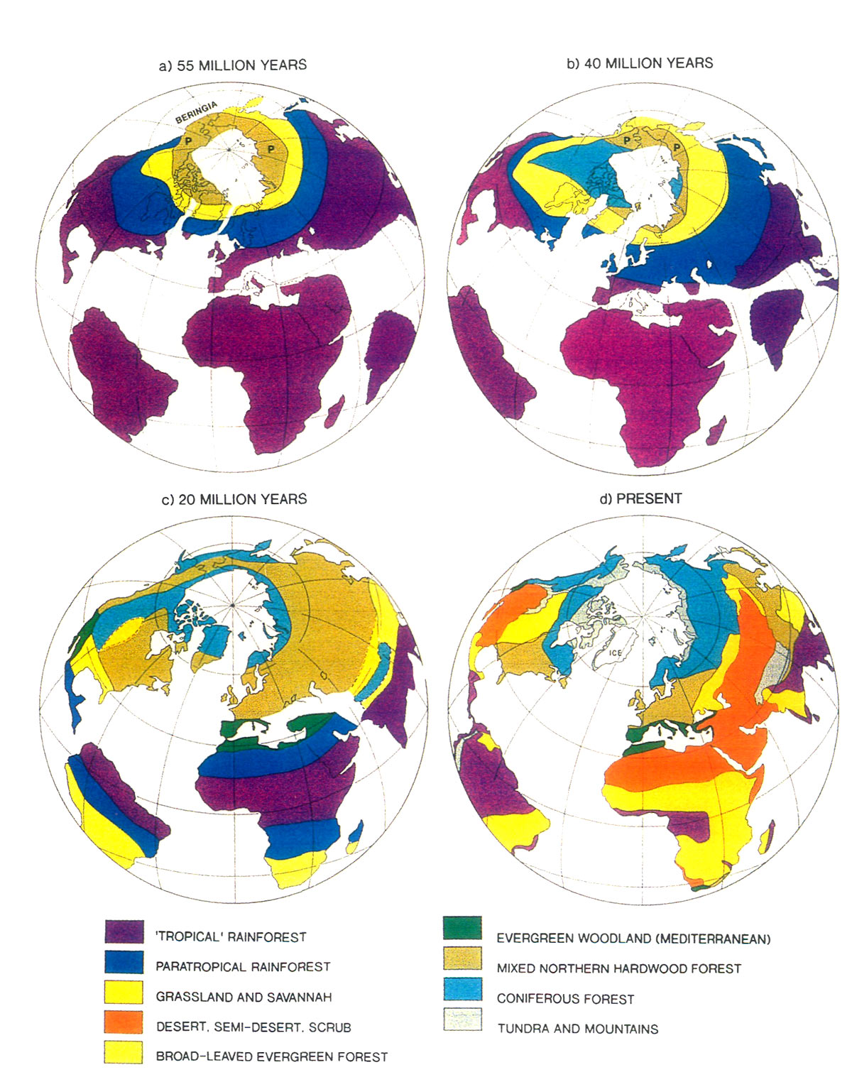 Jars v47n3 concerning the origin and distribution of rhododendrons figure 5 positions of continents and their vegetational zones publicscrutiny Images
