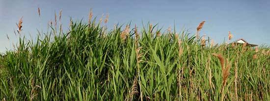 06 tall grass for Best tall grasses