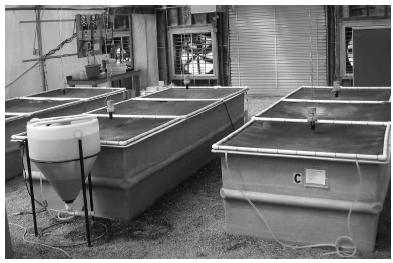 Figure 4. Three juvenile shrimp production tanks showing automatic             feeders and             solids             management clarifier.